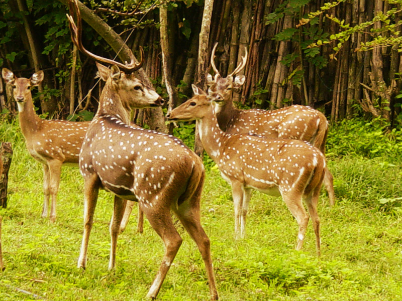 Mudumalai-National-Park